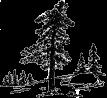ponderosa pine.1